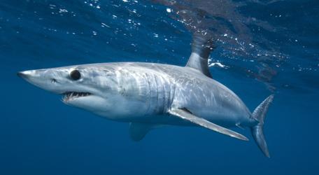 Programme Requins