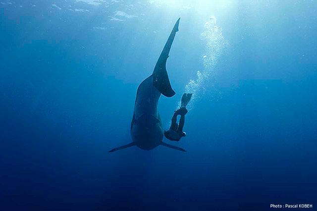 La crise Requins à La Réunion: les idées reçues sont vraies ou fausses? ?