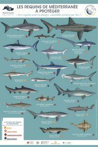 poster requins méditerranée a protéger