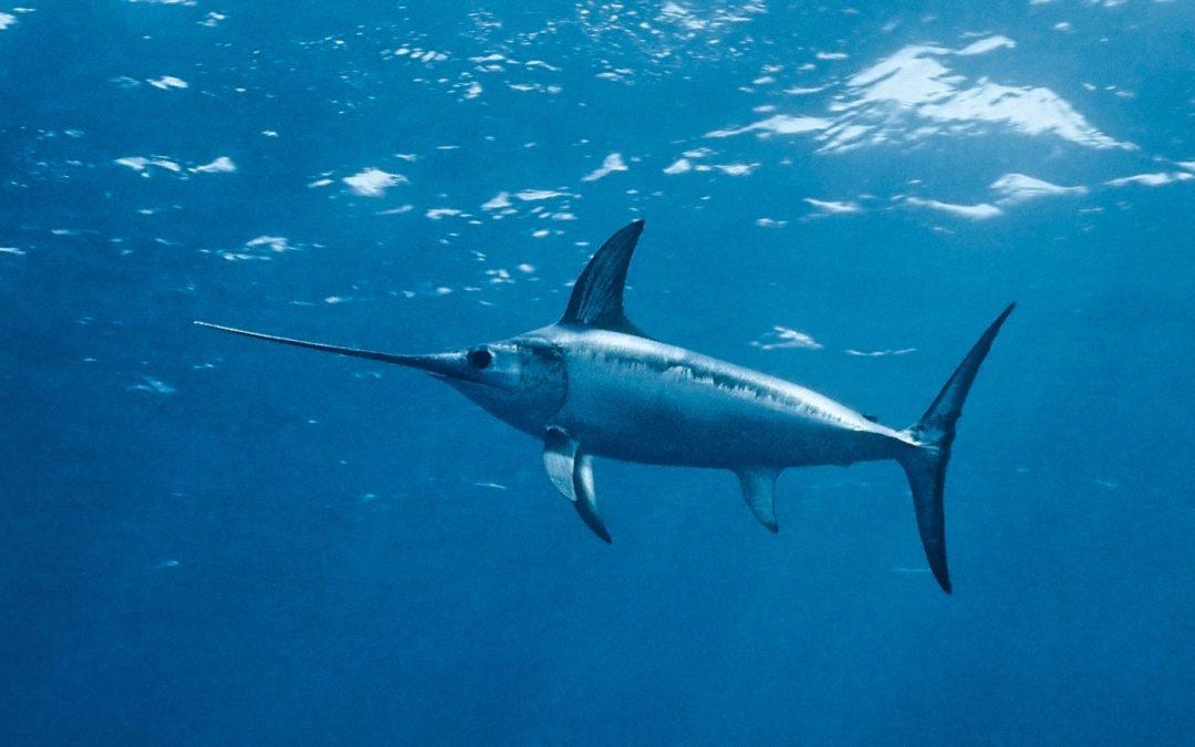Pour l'interdiction définitive des concours de chasse sous‐marine!