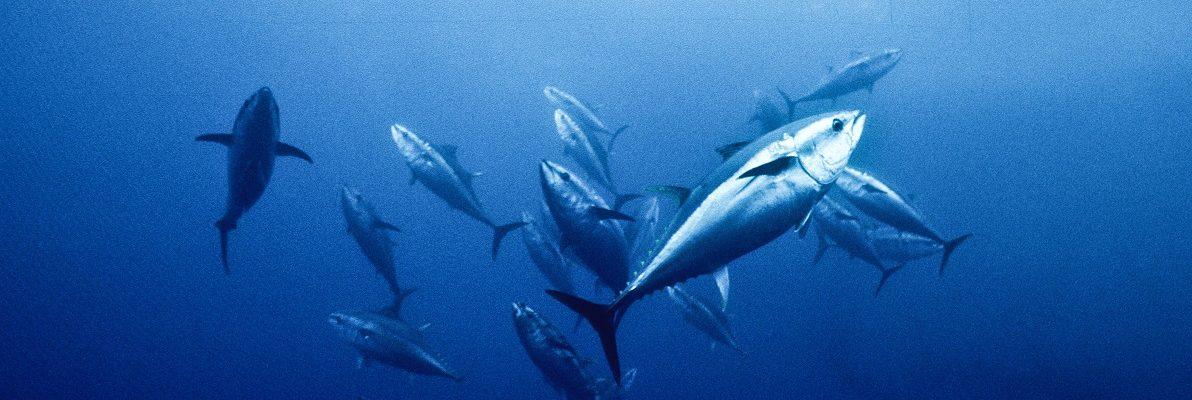 Pour l'interdiction définitive des concours de chasse sous‐marine !