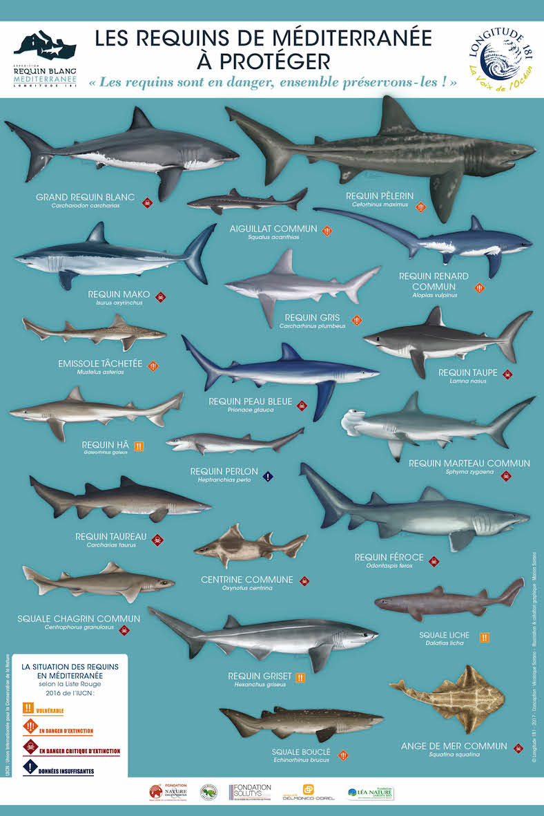 RequinMed PosterRequins BD