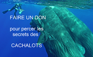 dons cachalots