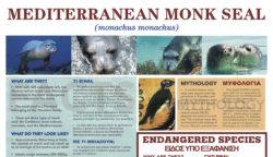 Mediterranean Monk Seal EN GR e
