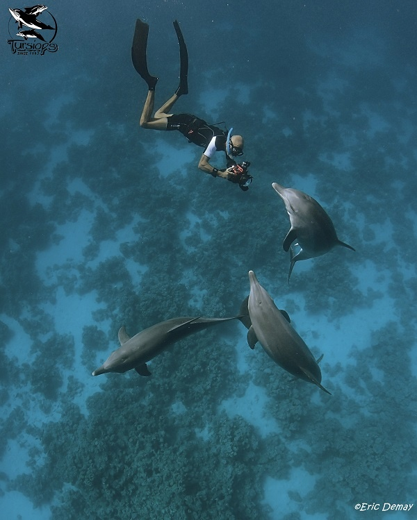 eric demay dauphins