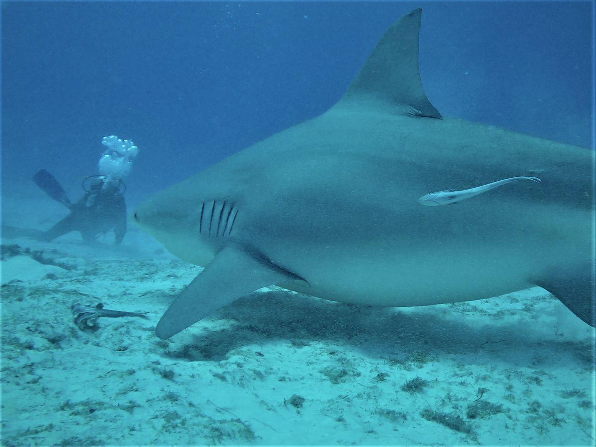 Au nom du requin le surfeur est il confondu avec une tortue Episode