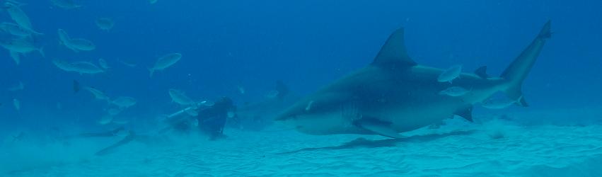 """""""Au nom du Requin"""" : un film et une ambition avec une suite? – Episode 2"""