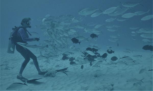 """""""Au nom du requin"""", le nourrir ou pas?   épisode 5 (rediffusion)"""