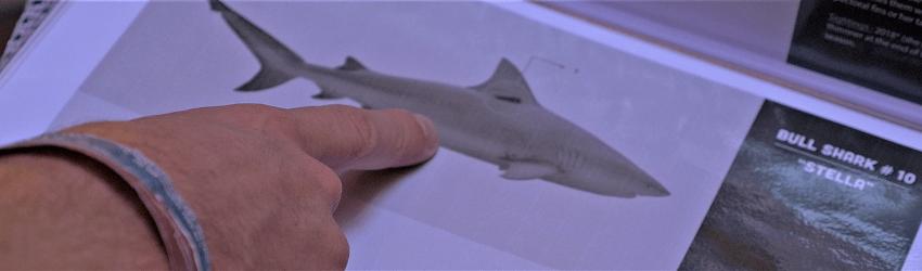 """""""Au nom du requin"""" : le nourrir ou pas ? – Episode 5"""