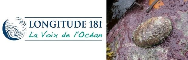 Le Business des espèces marines menacées, épisode 9 : Les ormeaux