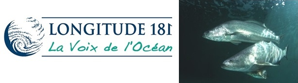Le Business des espèces marines menacées, épisode 7 : Les Totoabas