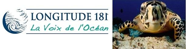 Le Business des espèces marines menacées, épisode 8 : Les tortues marines