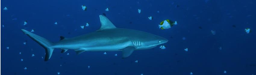 Pas de requins dans mon assiette : déjà 80 restaurations collectives !