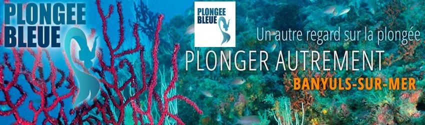 Rétrospective 2020 : Plongée Bleue mis à l'honneur dans Plongez!