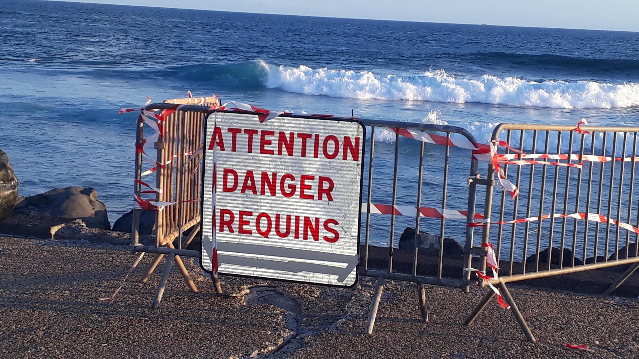 """Ile de La Réunion, 10 ans de """"Crise Requins"""""""