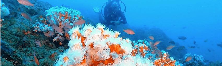 S.O.S. Corales by Coral Guardian : un projet de conservation marine participative en Méditerranée