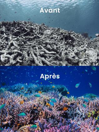 coral guardian recifs avant apres