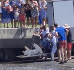 requin-marteau-reunion