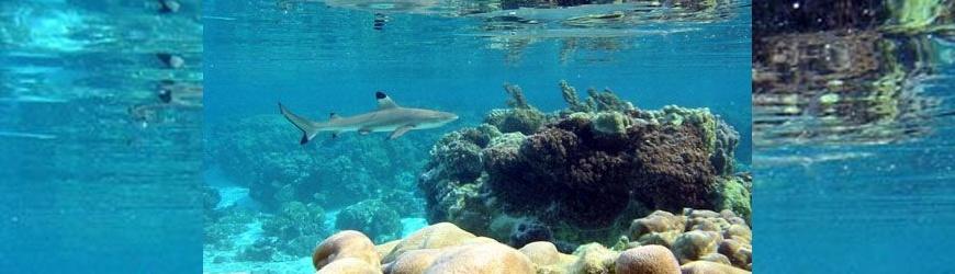 Pourquoi l'Océan doit-il être un sujet de droit? – L'Océan a des droits, épisode 15