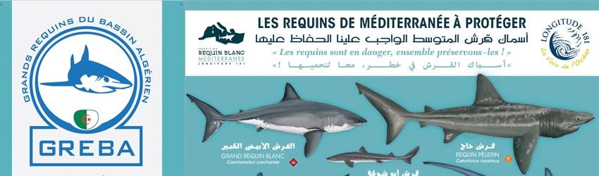 Requins en Algérie : le Ministère des pêches s'implique