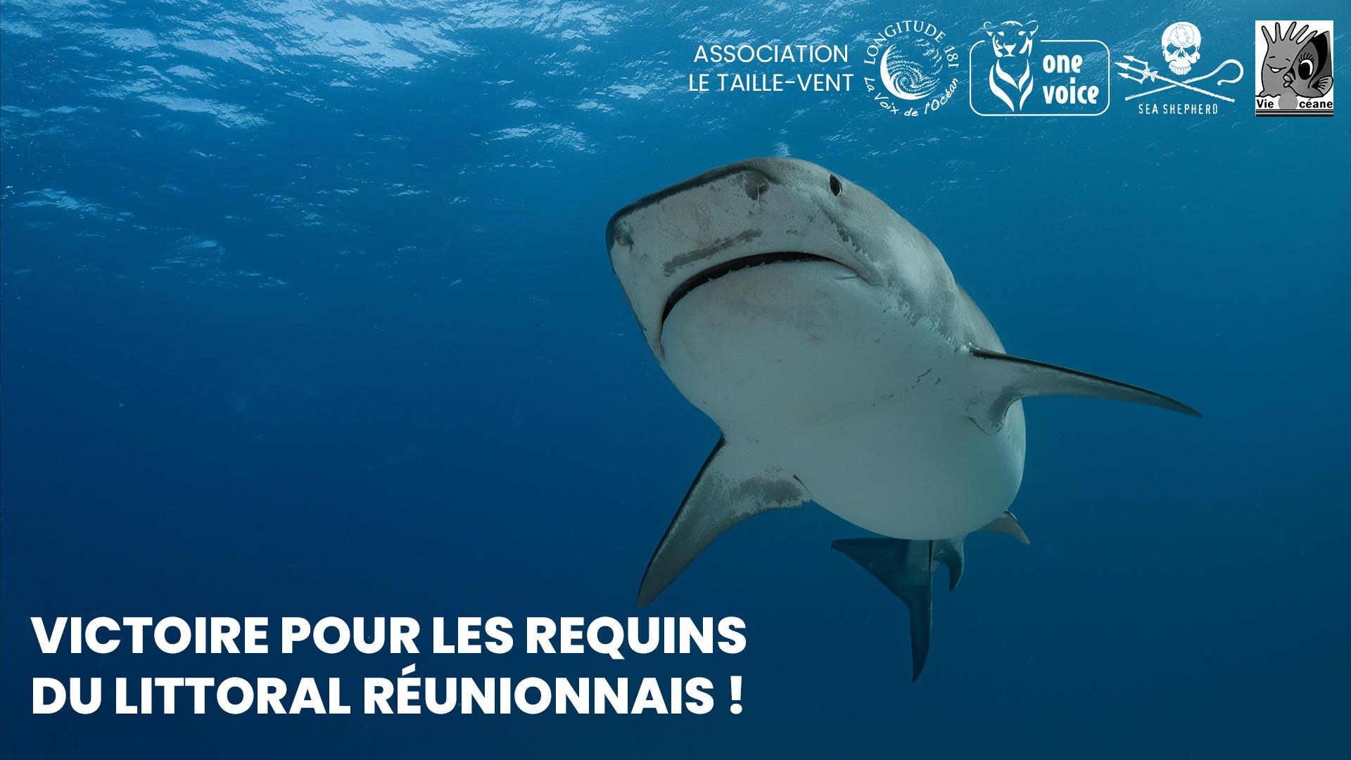 Victoire pour les requins de La Réunion